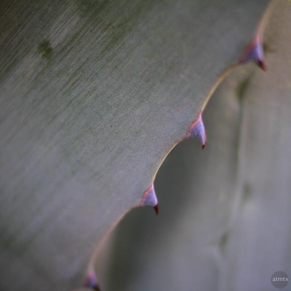 Austin SOCO Abstract Agave 1